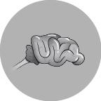 Abbildung Gehirn